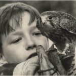 David Bradley and the kestrel that played Kes from 1968